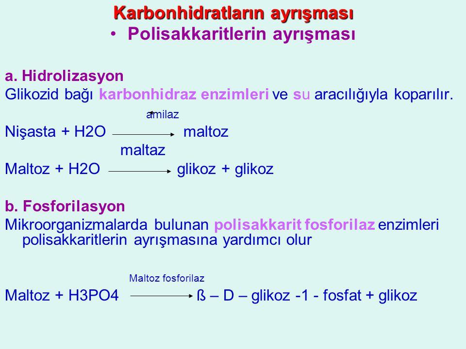 Karbonhidratların ayrışması