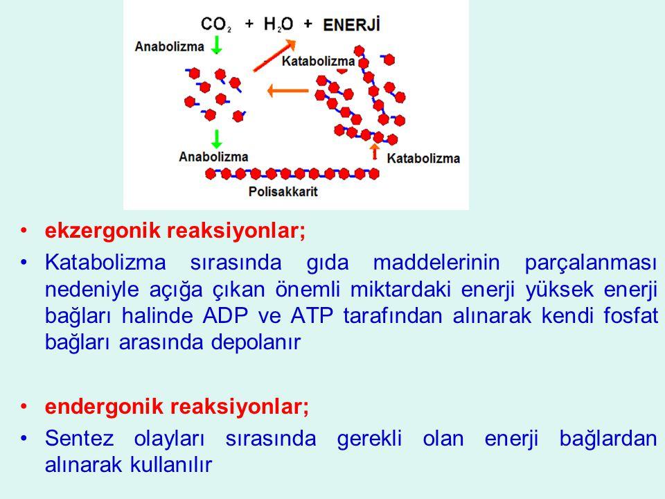 ekzergonik reaksiyonlar;