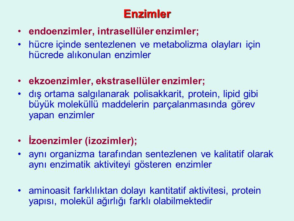 Enzimler endoenzimler, intrasellüler enzimler;
