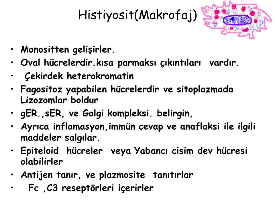 Histiyosit(Makrofaj)