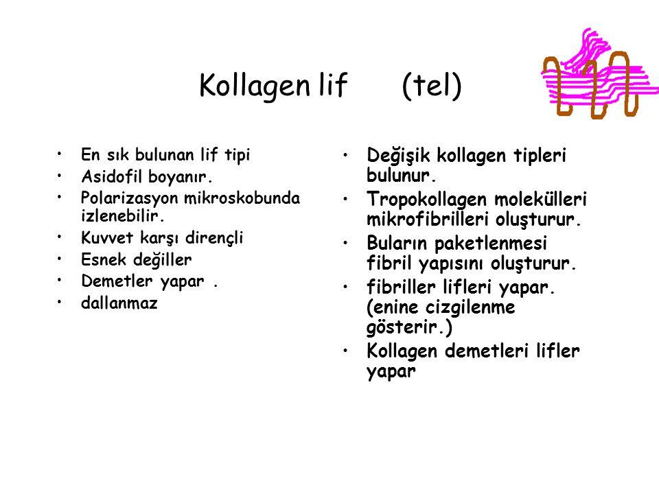 Kollagen lif (tel) Değişik kollagen tipleri bulunur.