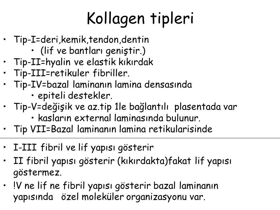Kollagen tipleri Tip-I=deri,kemik,tendon,dentin