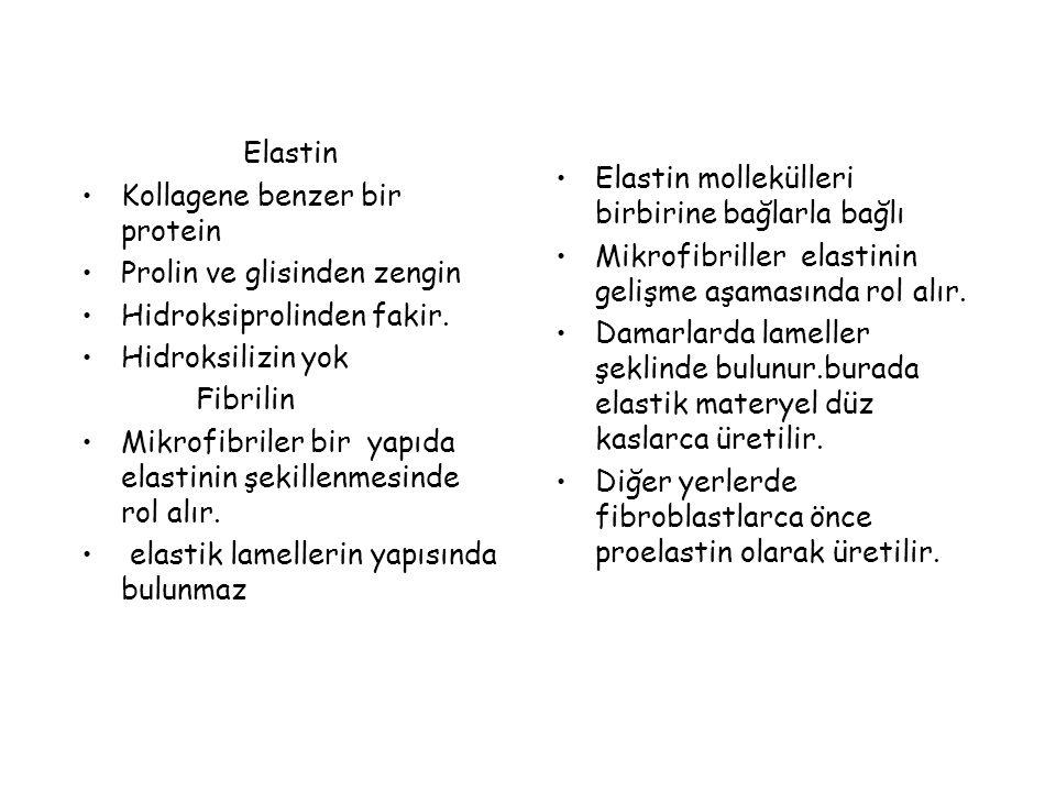 Elastin Kollagene benzer bir protein. Prolin ve glisinden zengin. Hidroksiprolinden fakir. Hidroksilizin yok.