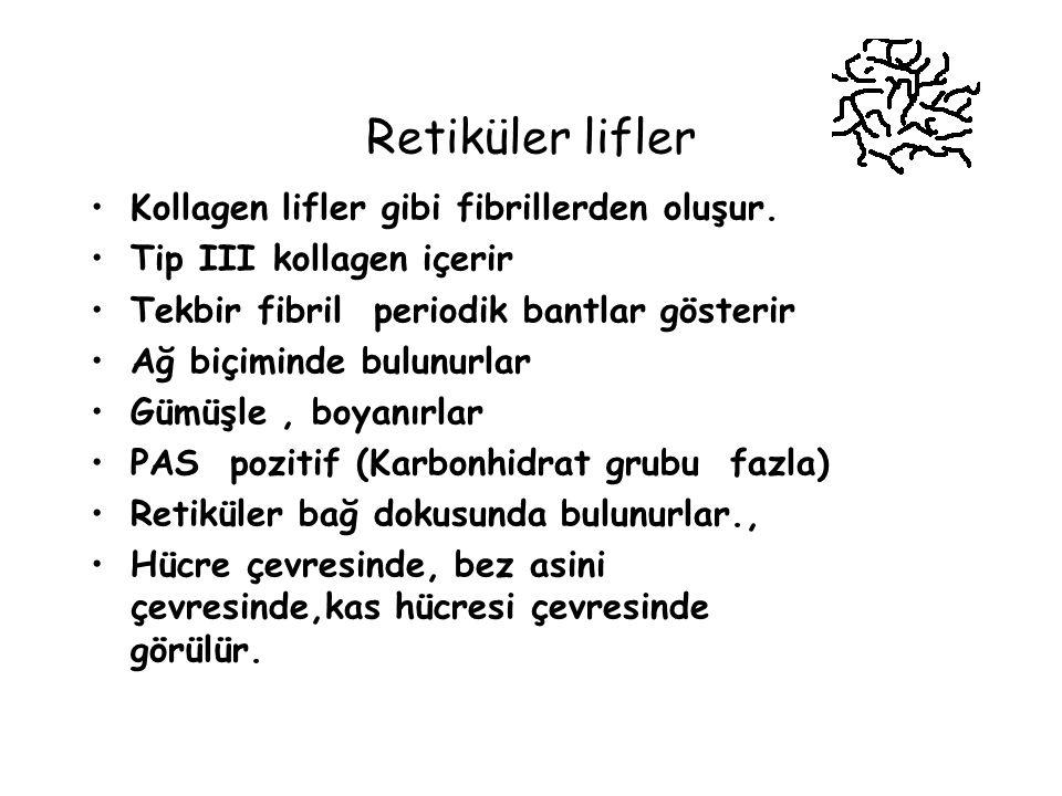 Retiküler lifler Kollagen lifler gibi fibrillerden oluşur.