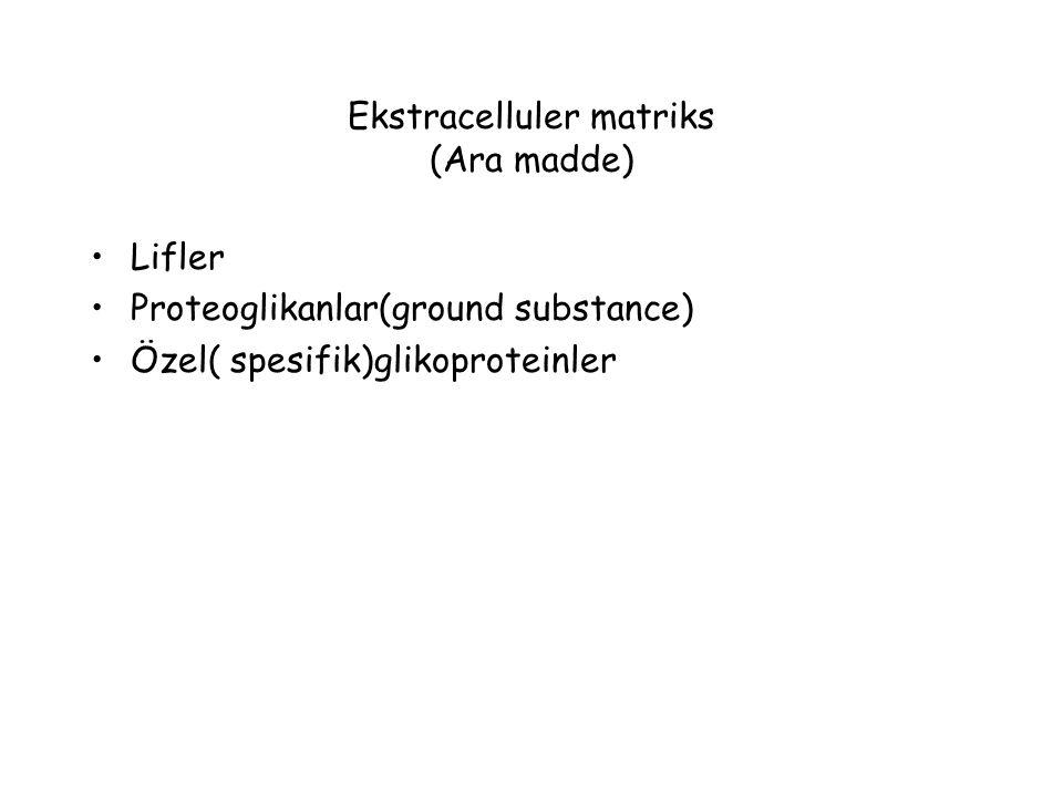 Ekstracelluler matriks (Ara madde)