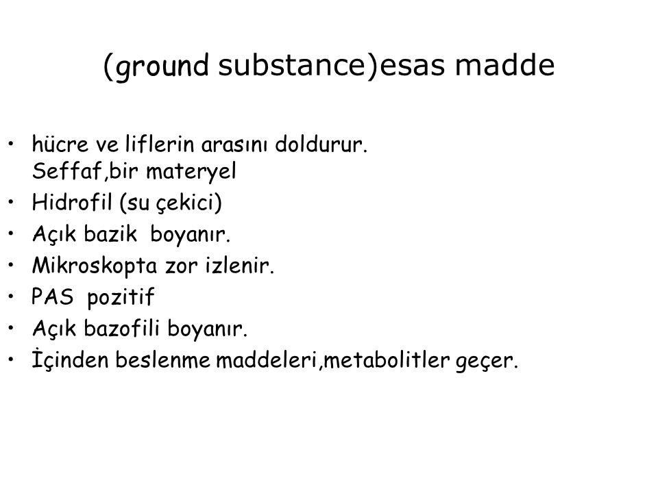 (ground substance)esas madde