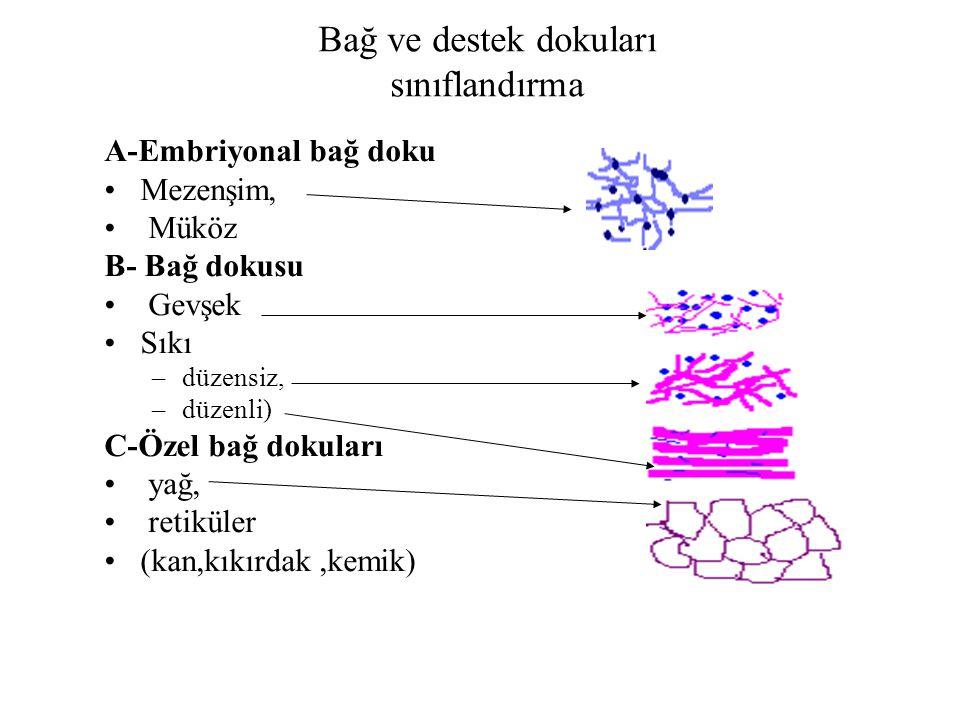 Bağ ve destek dokuları sınıflandırma