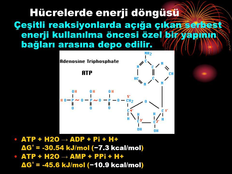 Hücrelerde enerji döngüsü