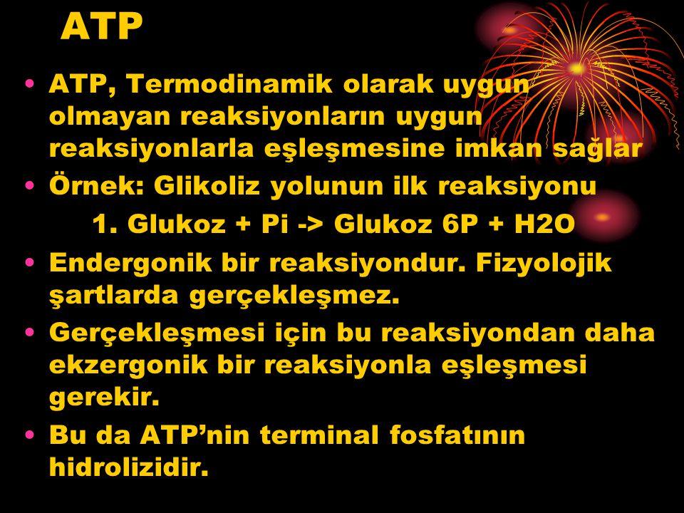 ATP ATP, Termodinamik olarak uygun olmayan reaksiyonların uygun reaksiyonlarla eşleşmesine imkan sağlar.