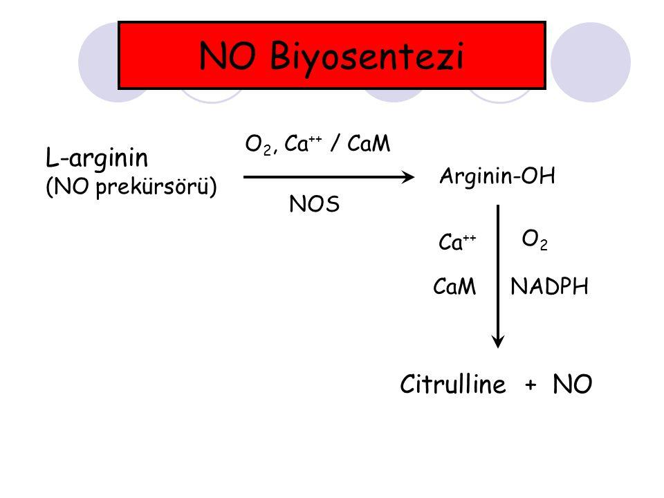 NO Biyosentezi L-arginin Citrulline + NO O2, Ca++ / CaM