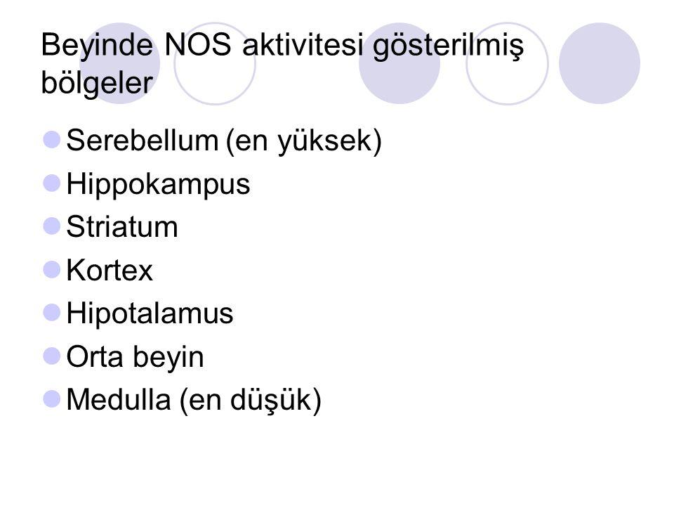 Beyinde NOS aktivitesi gösterilmiş bölgeler