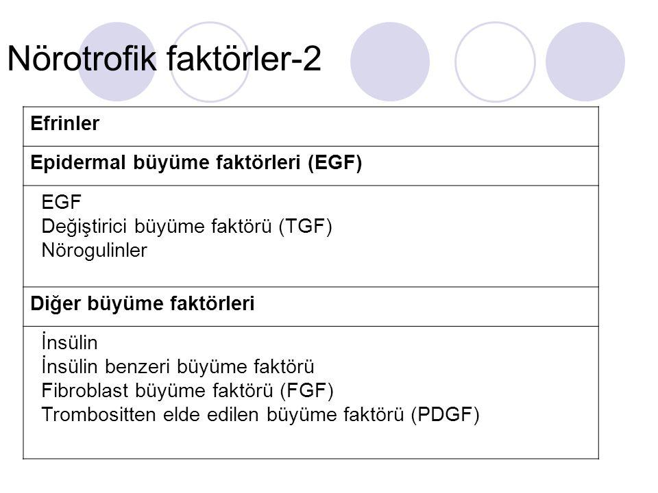 Nörotrofik faktörler-2