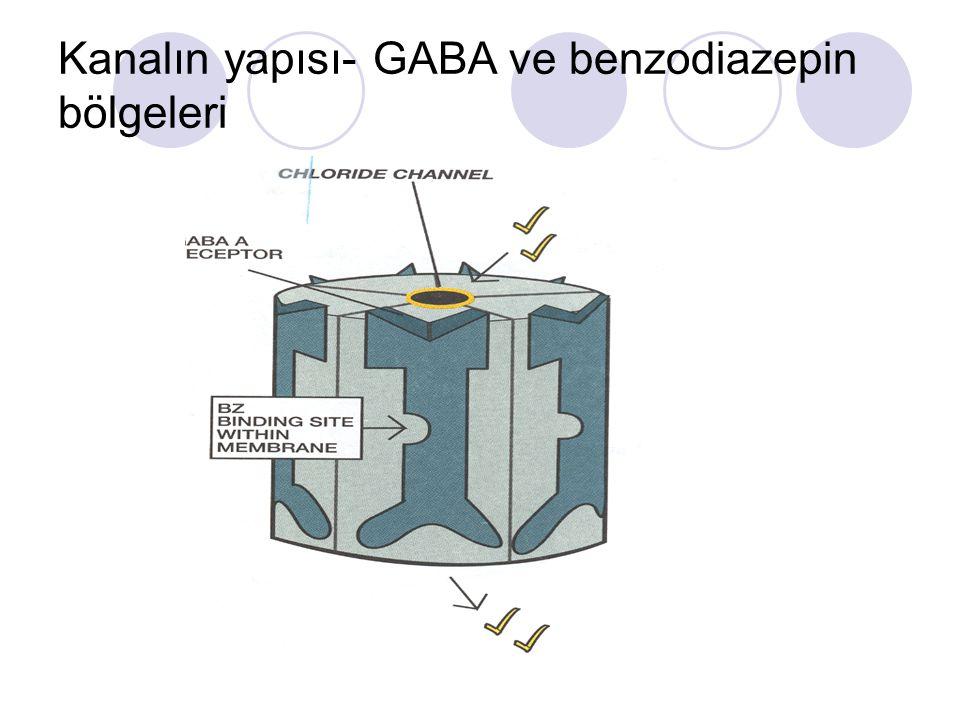 Kanalın yapısı- GABA ve benzodiazepin bölgeleri