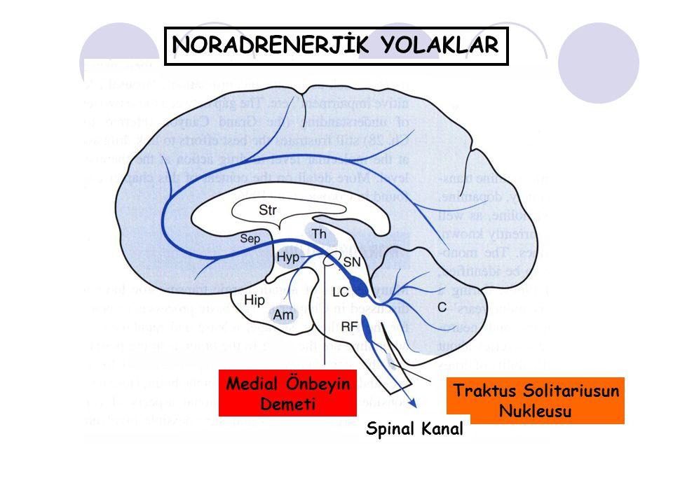 NORADRENERJİK YOLAKLAR