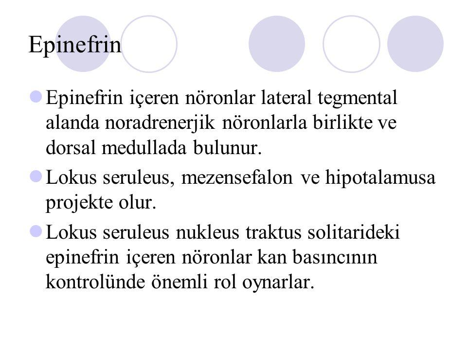 Epinefrin Epinefrin içeren nöronlar lateral tegmental alanda noradrenerjik nöronlarla birlikte ve dorsal medullada bulunur.