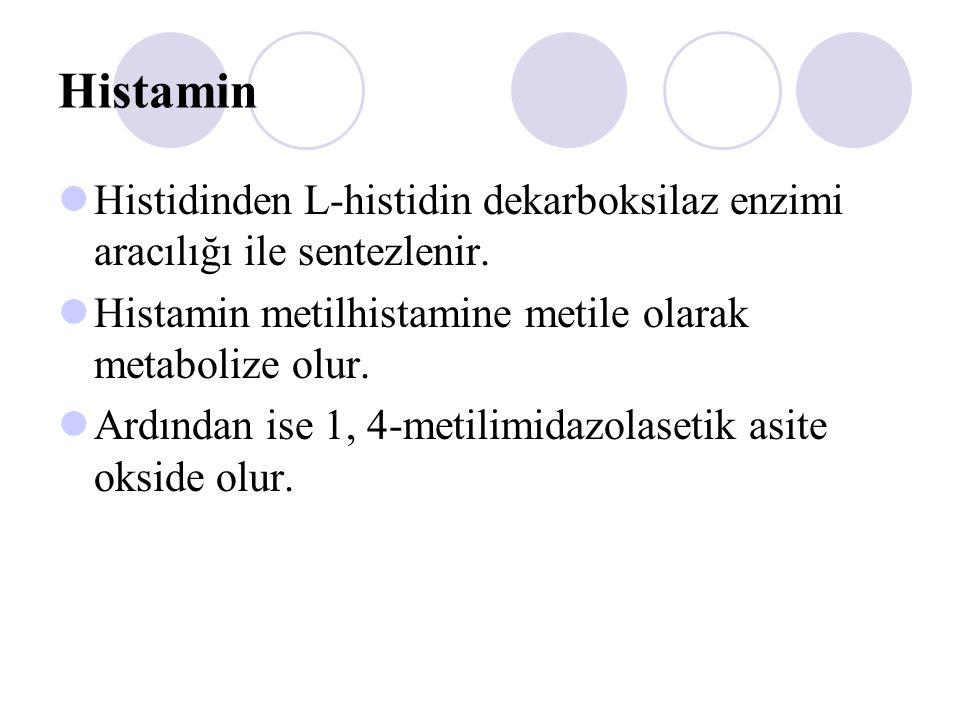 Histamin Histidinden L-histidin dekarboksilaz enzimi aracılığı ile sentezlenir. Histamin metilhistamine metile olarak metabolize olur.