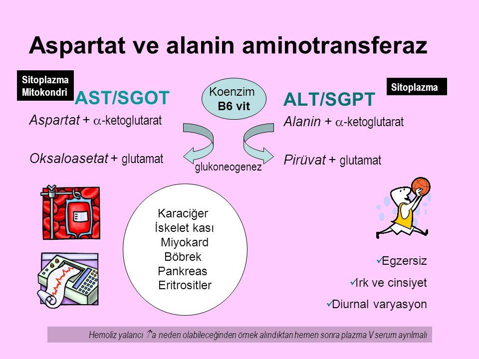 Aspartat ve alanin aminotransferaz