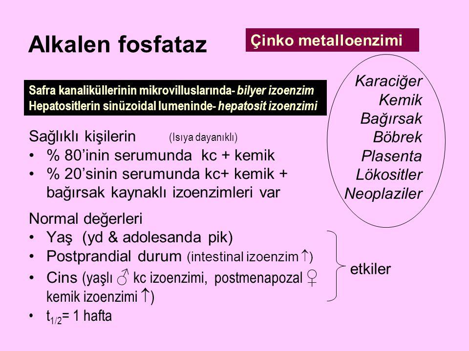 Alkalen fosfataz Çinko metalloenzimi Karaciğer Kemik Bağırsak Böbrek