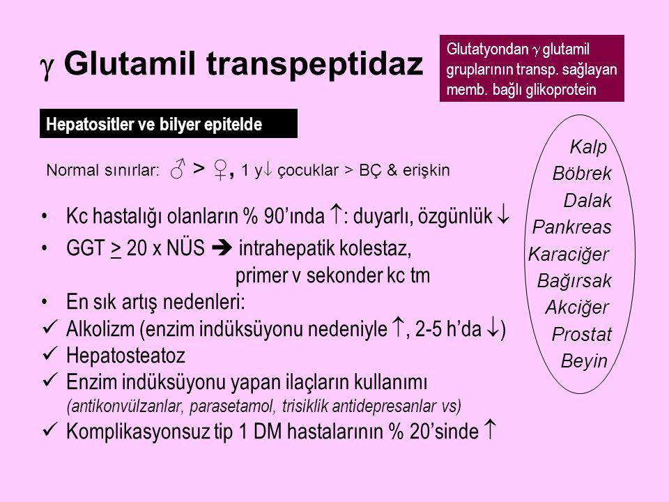  Glutamil transpeptidaz