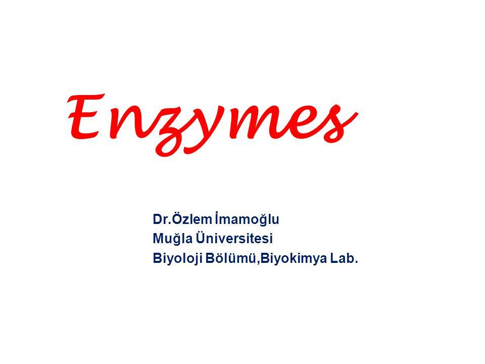 Enzymes Dr.Özlem İmamoğlu Muğla Üniversitesi
