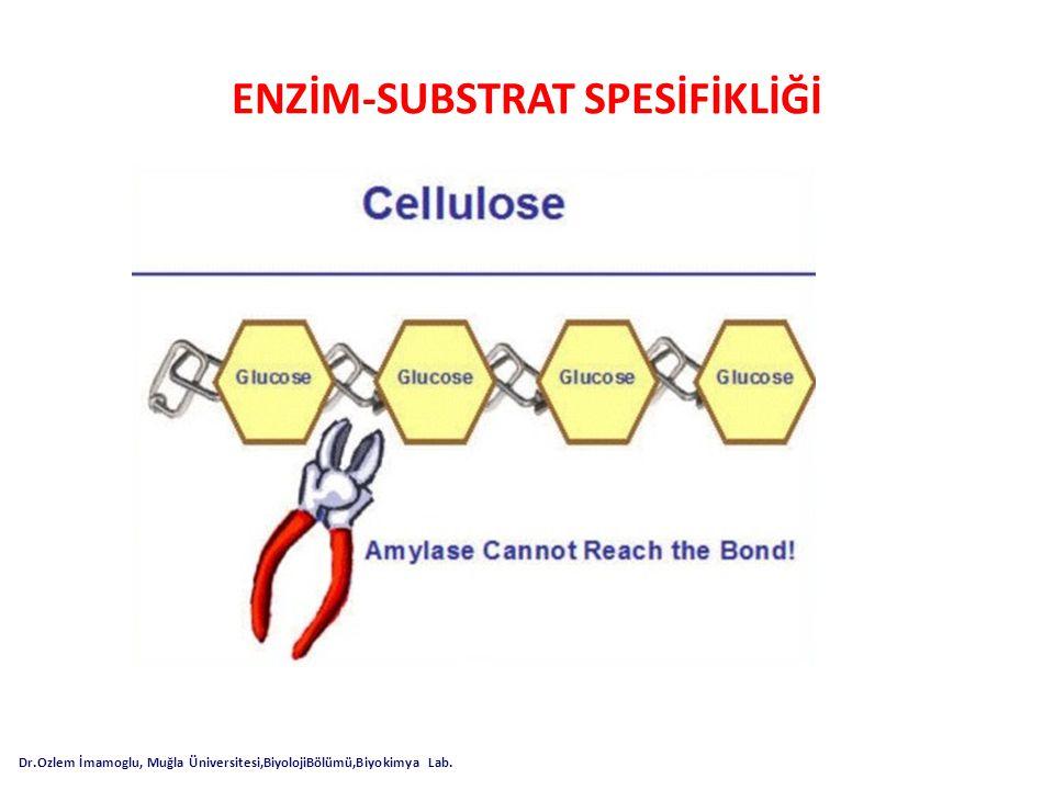 ENZİM-SUBSTRAT SPESİFİKLİĞİ
