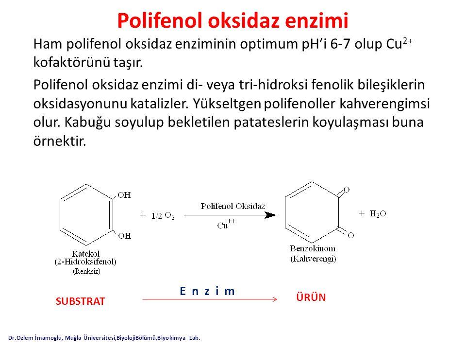 Polifenol oksidaz enzimi
