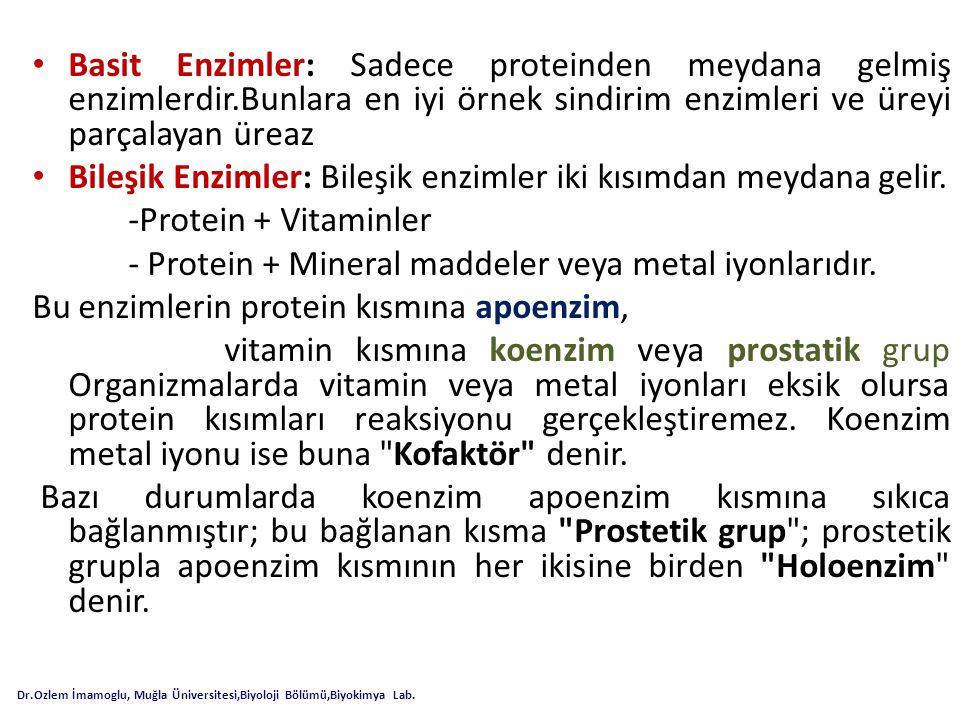Bileşik Enzimler: Bileşik enzimler iki kısımdan meydana gelir.