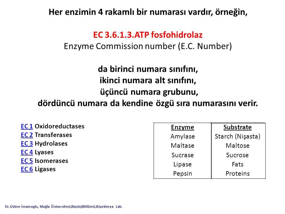 Her enzimin 4 rakamlı bir numarası vardır, örneğin,