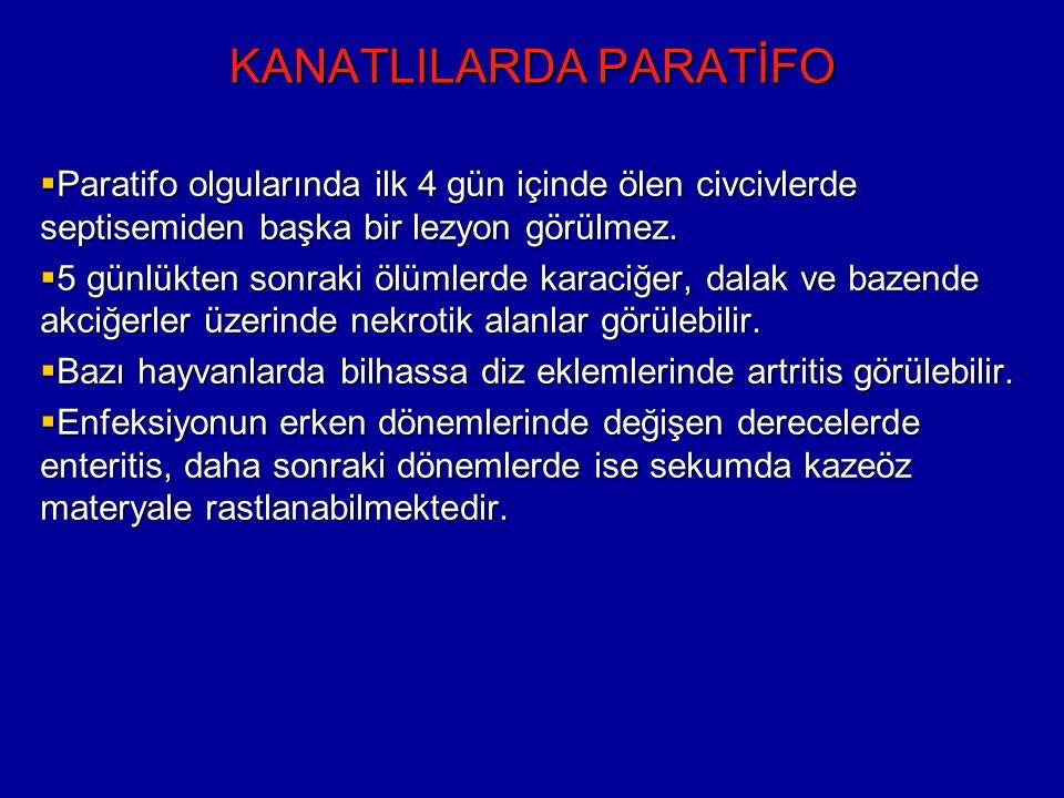 KANATLILARDA PARATİFO