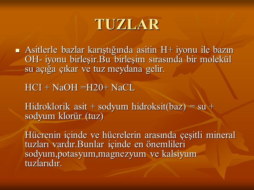 TUZLAR
