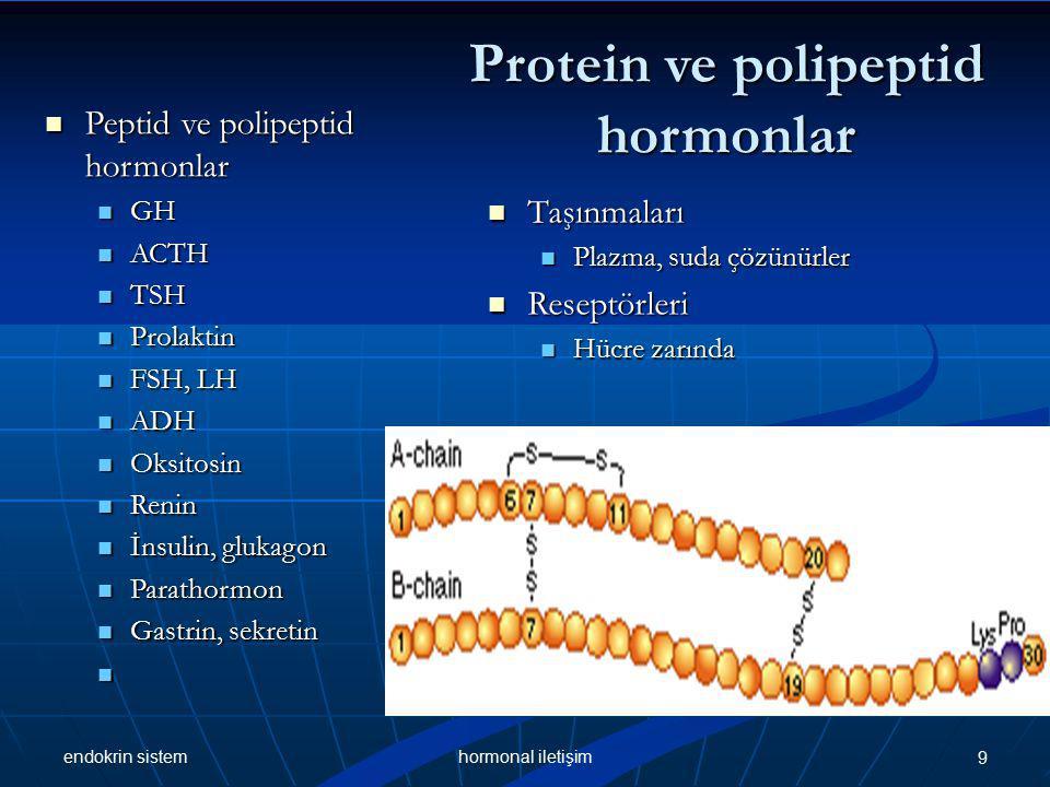 Protein ve polipeptid hormonlar