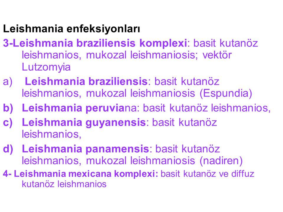 Leishmania enfeksiyonları