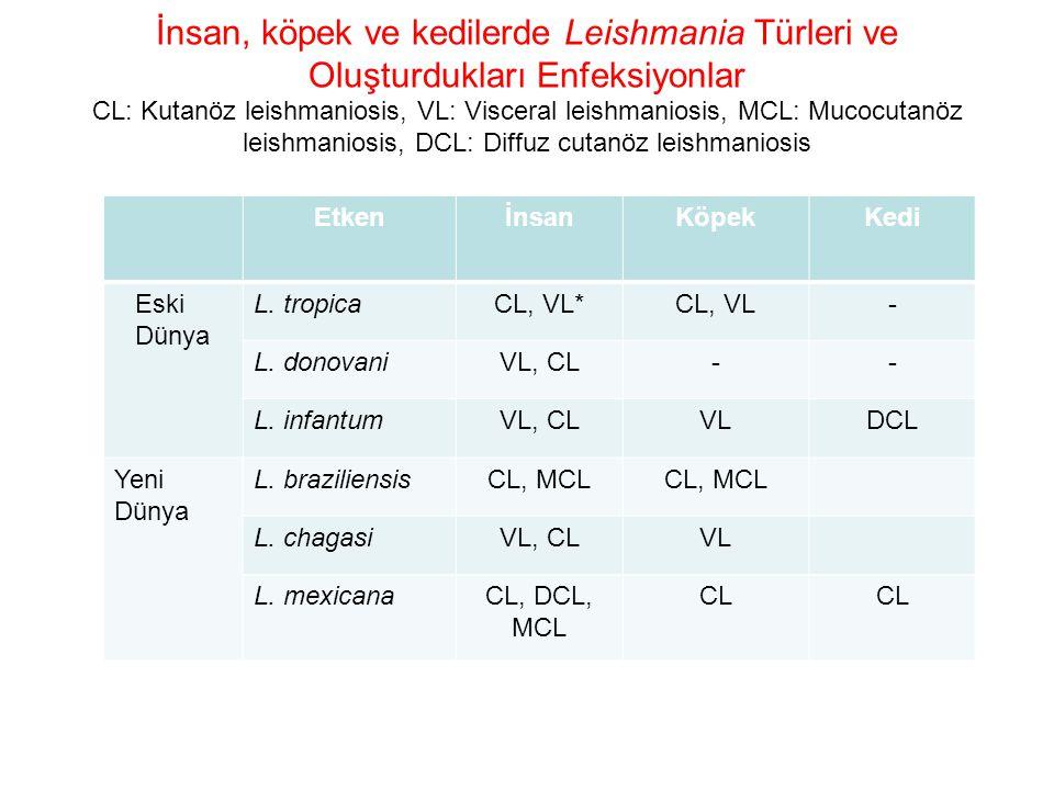 İnsan, köpek ve kedilerde Leishmania Türleri ve Oluşturdukları Enfeksiyonlar CL: Kutanöz leishmaniosis, VL: Visceral leishmaniosis, MCL: Mucocutanöz leishmaniosis, DCL: Diffuz cutanöz leishmaniosis