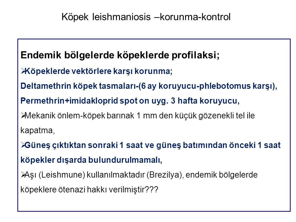 Köpek leishmaniosis –korunma-kontrol