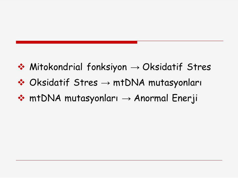 Mitokondrial fonksiyon → Oksidatif Stres