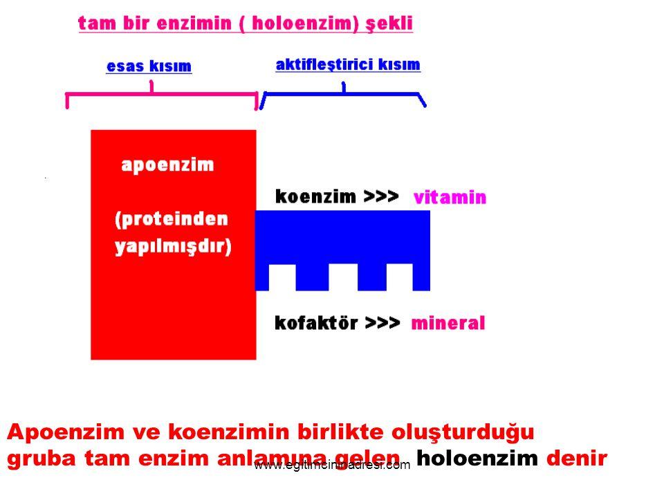 Apoenzim ve koenzimin birlikte oluşturduğu
