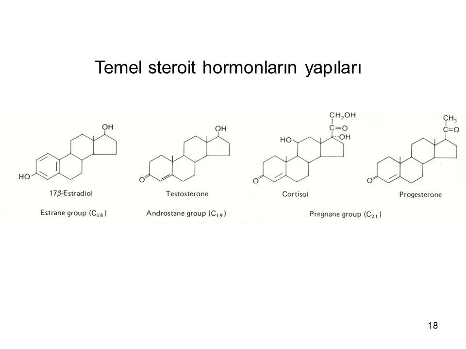 Temel steroit hormonların yapıları
