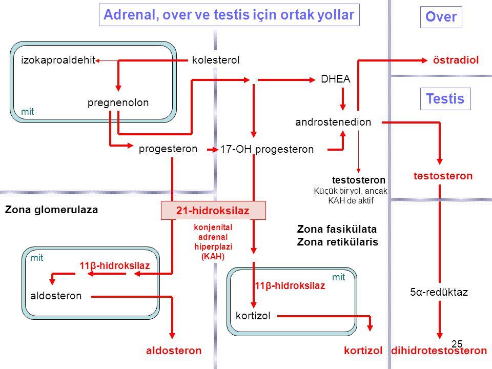 konjenital adrenal hiperplazi (KAH)