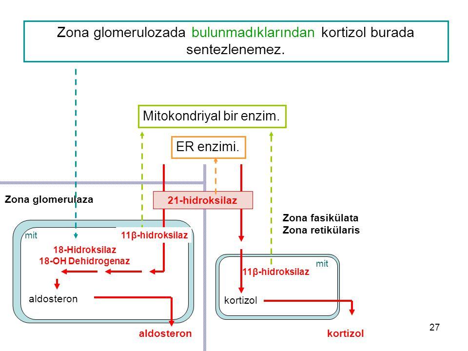 Zona glomerulozada bulunmadıklarından kortizol burada sentezlenemez.