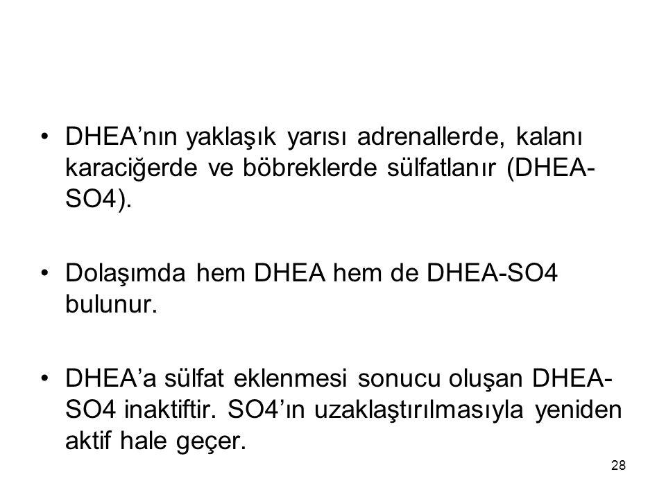 DHEA'nın yaklaşık yarısı adrenallerde, kalanı karaciğerde ve böbreklerde sülfatlanır (DHEA-SO4).