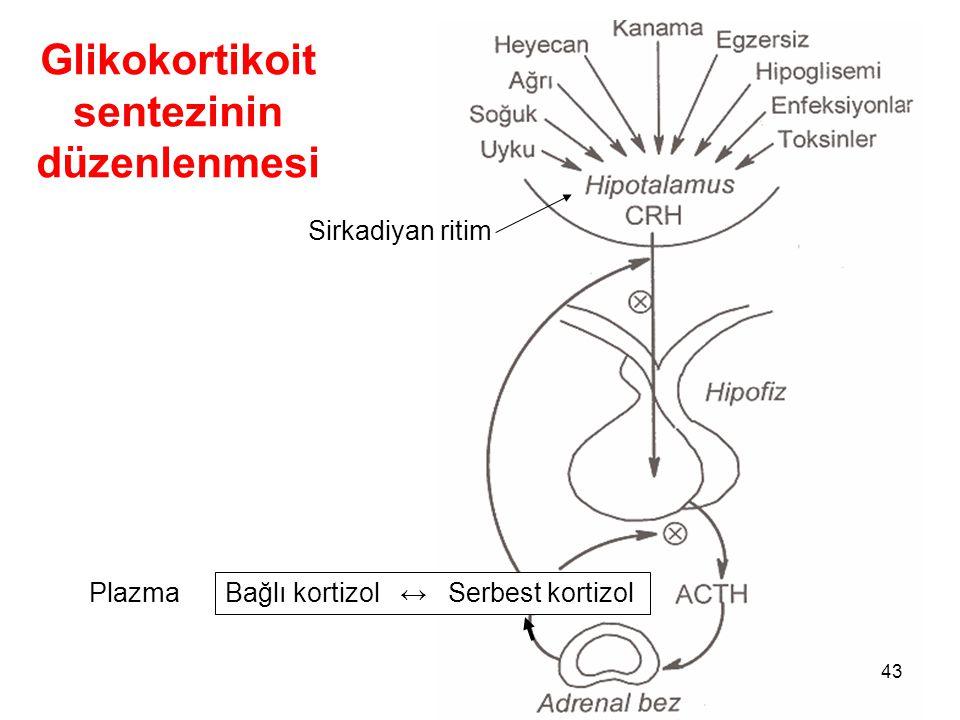 Glikokortikoit sentezinin düzenlenmesi