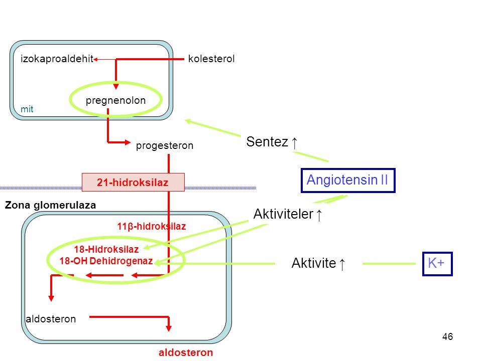 Sentez ↑ Angiotensin II Aktiviteler ↑ Aktivite ↑ K+ izokaproaldehit