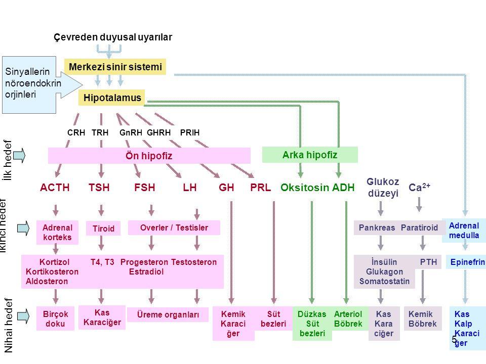 Çevreden duyusal uyarılar İnsülin Glukagon Somatostatin