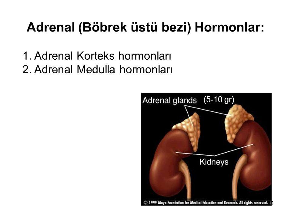 Adrenal (Böbrek üstü bezi) Hormonlar: