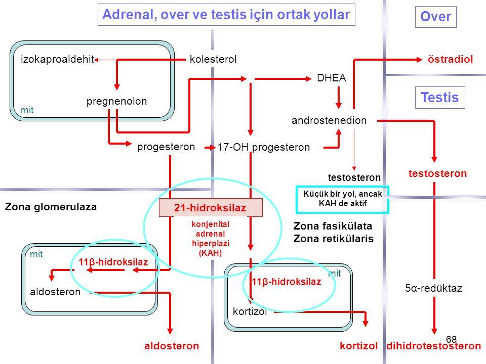 Küçük bir yol, ancak KAH de aktif konjenital adrenal hiperplazi (KAH)