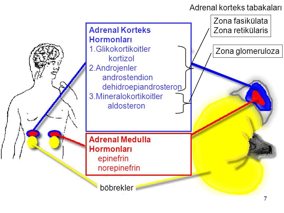 Adrenal korteks tabakaları