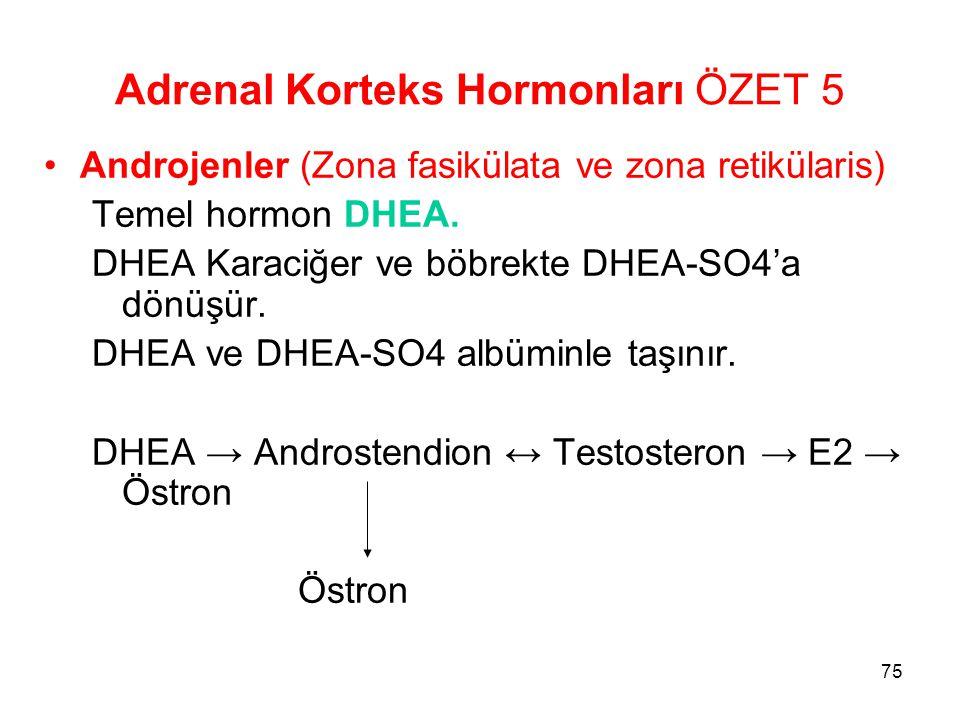 Adrenal Korteks Hormonları ÖZET 5