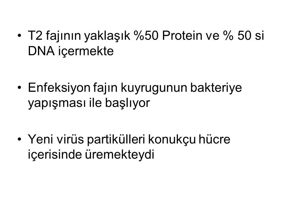 T2 fajının yaklaşık %50 Protein ve % 50 si DNA içermekte