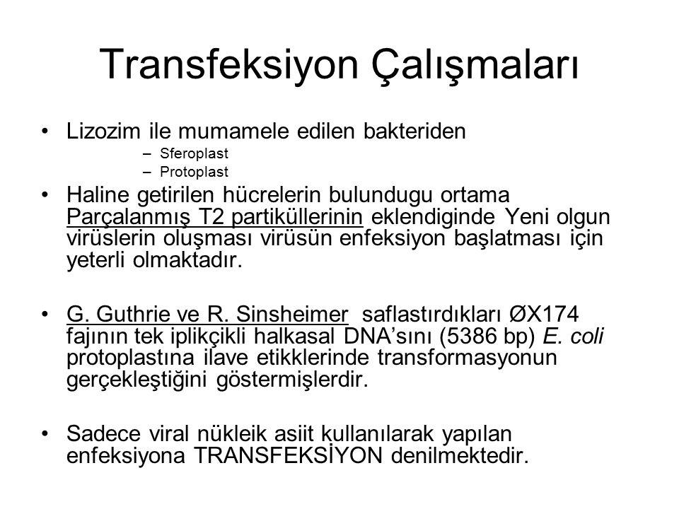 Transfeksiyon Çalışmaları