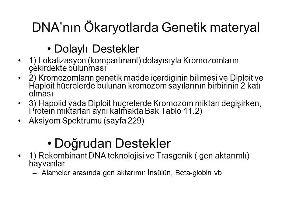 DNA'nın Ökaryotlarda Genetik materyal